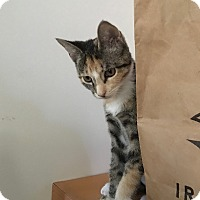 Adopt A Pet :: Cassie - Colmar, PA