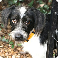 Adopt A Pet :: Jake - MEET HIM - Bedminster, NJ