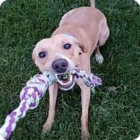 Adopt A Pet :: Berkeley ADOPTION PENDING - Northville, MI