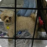 Adopt A Pet :: Blondie - Mukwonago, WI
