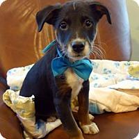 Adopt A Pet :: Daniel - ADOPTION PENDING!! - Arlington, VA