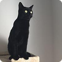 Adopt A Pet :: Samantha - Waldorf, MD