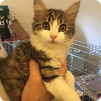 Adopt A Pet :: Buffy - Thousand Oaks, CA