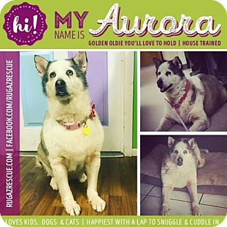 Husky Mix Dog for adoption in New Port Richey, Florida - Aurora