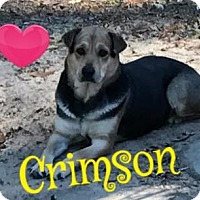 Adopt A Pet :: Crimson - Cantonment, FL
