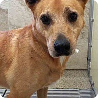 Adopt A Pet :: Veronica - Oswego, IL