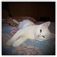 Adopt A Pet :: REN - Medford, WI