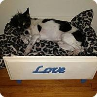 Adopt A Pet :: Bello - Aiken, SC