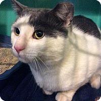 Adopt A Pet :: Cupcake - Breinigsville, PA