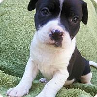 Adopt A Pet :: Doc - Petersburg, VA