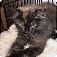 Adopt A Pet :: Athea (KL) - Little Falls, NJ