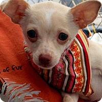Adopt A Pet :: Tulip - Green Bay, WI