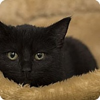 Adopt A Pet :: Etta James - Lombard, IL