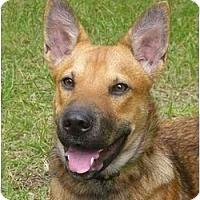 Adopt A Pet :: Miley - Mocksville, NC