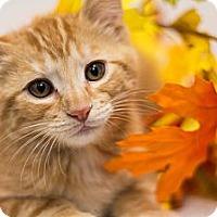 Adopt A Pet :: Lester - Sacramento, CA