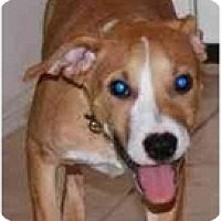 Adopt A Pet :: Ziti - Gilbert, AZ