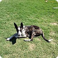 Adopt A Pet :: Reeses - Homewood, AL