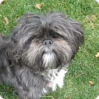 Adopt A Pet :: Brady - Framingham, MA