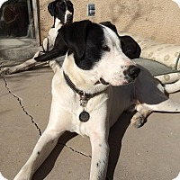 Adopt A Pet :: Stanley - Albuquerque, NM
