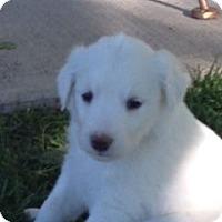 Adopt A Pet :: Bianca - Greeley, CO