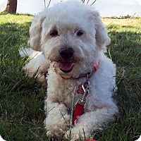 Adopt A Pet :: Alex - Encino, CA