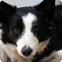 Adopt A Pet :: BUTTON - San Pedro, CA