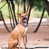 Adopt A Pet :: Foster - Austin, TX