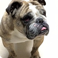 Adopt A Pet :: Lucy #2 - Columbus, OH