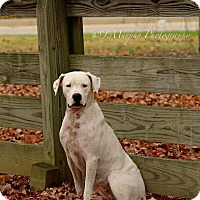Adopt A Pet :: Bianca *Med Hold*-NC - Virginia Beach, VA