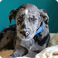 Adopt A Pet :: Chester - Waldorf, MD