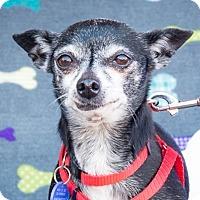Adopt A Pet :: Marge - San Marcos, CA