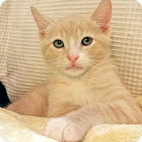 Adopt A Pet :: Oscar - Walnut Creek, CA