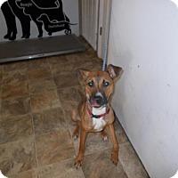 Adopt A Pet :: Hi Ho - Lewisburg, TN