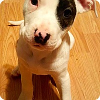 Adopt A Pet :: LOLLY - Olive Branch, MS