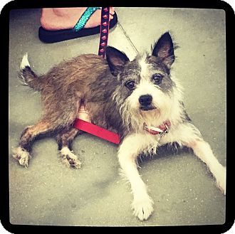 Terrier (Unknown Type, Small) Mix Dog for adoption in Grand Bay, Alabama - Stewart