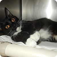 Adopt A Pet :: Marci (Petsmart New Bern) - Newport, NC