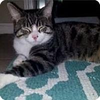 Adopt A Pet :: Daga - Jerseyville, IL