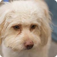 Adopt A Pet :: Pepe - Scottsdale, AZ