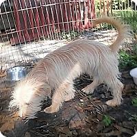Adopt A Pet :: Peaches - Okeechobee, FL