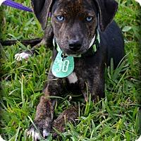 Adopt A Pet :: Fresca - Beaumont, TX