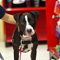 Adopt A Pet :: Lucy - Gainesville, FL