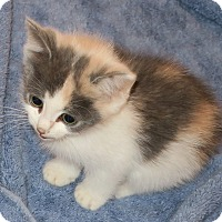 Adopt A Pet :: Myrte - Bedford, VA