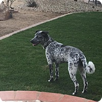 Adopt A Pet :: Squirtle - Phoenix, AZ