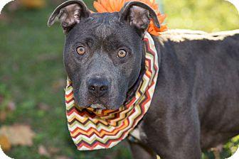Terrier (Unknown Type, Medium) Mix Dog for adoption in Flint, Michigan - Selena