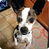 Adopt A Pet :: Dexter - Springfield, MO