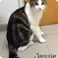 Adopt A Pet :: Jessie - Great Neck, NY