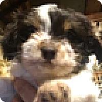 Adopt A Pet :: Zappa - Thousand Oaks, CA