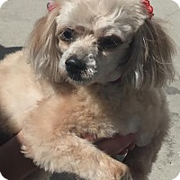 Adopt A Pet :: Ohnea - tampa, FL