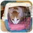 Photo 1 - Domestic Shorthair Cat for adoption in Stuarts Draft, Virginia - Precious