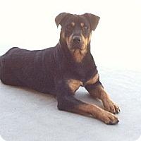 Adopt A Pet :: Zima - Gilbert, AZ